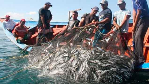 Diego Ricol Freyre recomienda: Sitios | Ofrecerán productos del mar a 10.000 familias este sábado