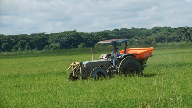 Diego Ricol Freyre recomienda: Pdvsa Agrícola inició siembra de mil hectáreas de arroz en Portuguesa
